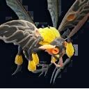 Bee (1).png